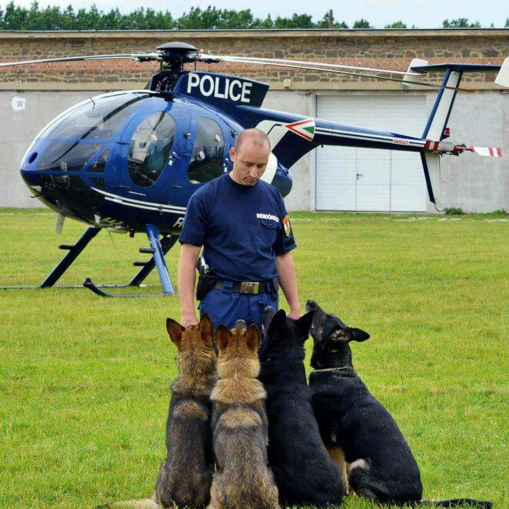 Perros militares                                                                                                                                                                                 Más