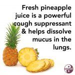 It feels like everyone on the planet is sick right now... (well, the ones who don't have Immune Shroom that is!) If you or your babies are coughing up a storm, pineapple juice is one of the safest, most effective cough remedies that works by getting to the root of ...