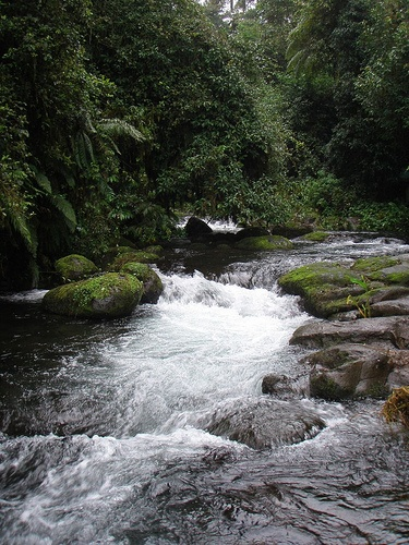 Jungle stream in Equatorial Guinea