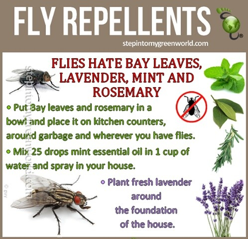 All natural fly repellent.
