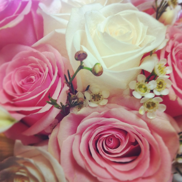 Pink and white roses with wax flower