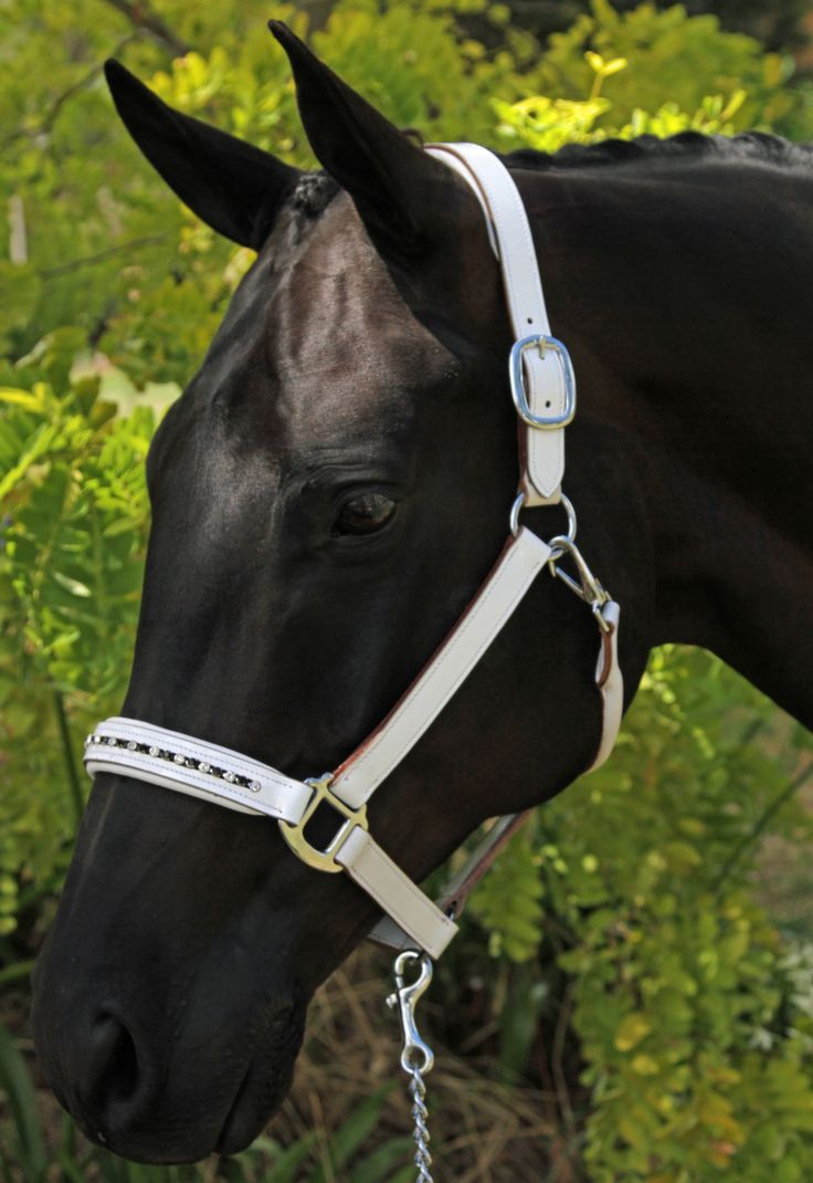 White Patent Leather Halter Crystal Nose & Poll - Halters & Leads | Flexible Fit Equestrian