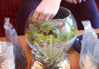 Création d'un terrarium