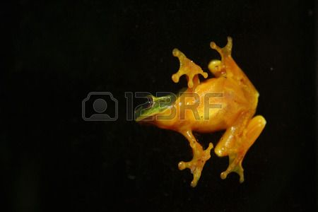 tree frog on the outside of a window at night