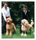 Curly Charm - Notre élevage - caniche, élevage, exposition, toilettage, chiot, chien