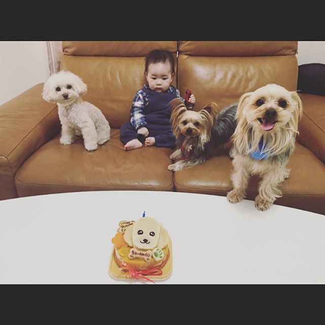U・x・U ミニョン  5歳 お誕生日おめでとう🎂🎈*°. . . . 一目惚れから5年。 甘えん坊であたしが大好きな可愛いこ🍓 . . . 誕生日プレゼントは 餌入れを作ってみたー! . . . 愛する愛犬と息子 たいへんだけど可愛い可愛い家族🏡❤ . . . #愛犬 #生後9ヶ月  #ケーキ #誕生日 #5歳 #トイプードル #トイプー #クリーム #3kg  #ヨークシャテリア  #ヨークシャ #ヨーキー #ミニョン #minyon #ラヴィ #lavie  #赤ちゃんと犬  #赤ちゃんとの暮らし #家族 #ポーセラーツ #餌入れ #dog #🐶 #🐩