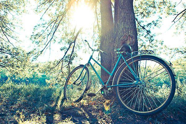 Ποδήλατο στο δάσος | Vintage