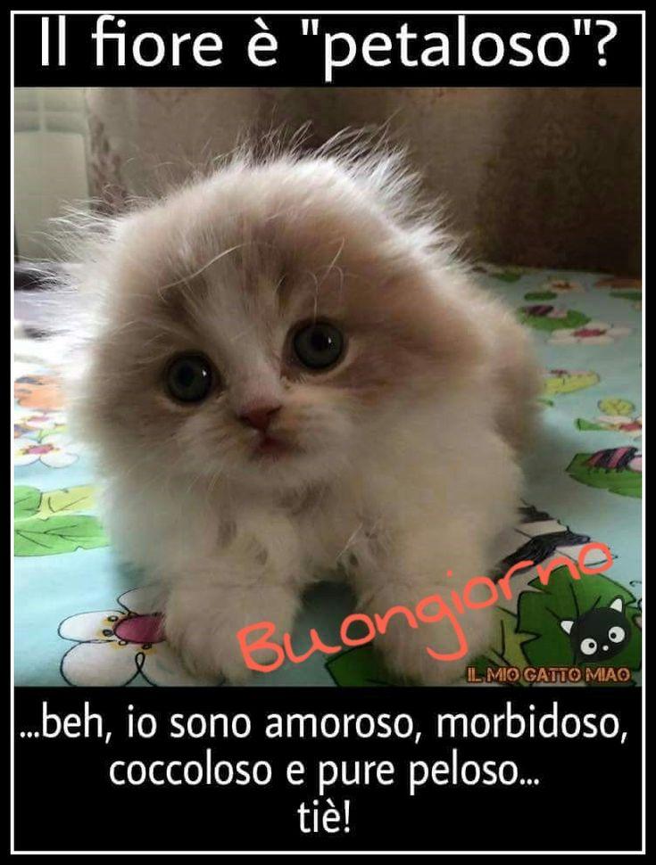 Buongiorno buongiorno good morning buongiorno for Buongiorno con gattini