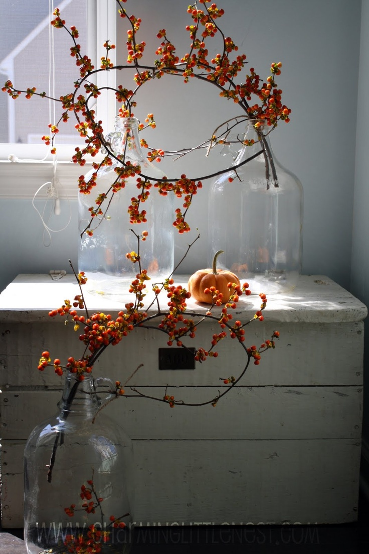Wish i could find or buy bittersweet branches in our area don t - Holiday Decorating With Bittersweet Vine