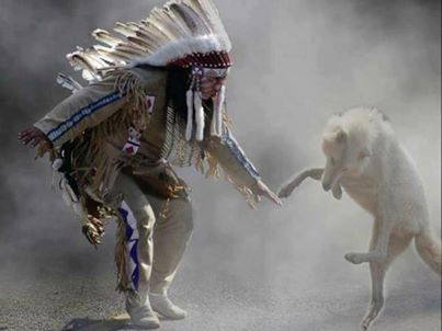 110 best images about native american on Pinterest | Wolves, Chief ...