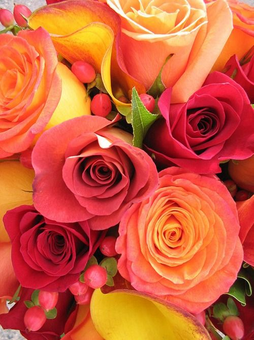 flowersSunsets Ideas, Beautiful Roses, Beautiful Colors, Colors Mixed, Summer Rose, Wedding Colors, Floral, Flower, Sunsets Rose