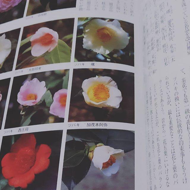 【kimonotoveya】さんのInstagramをピンしています。 《ある意味〆切日を作って 自分にトライ。。 ドキドキしながら、お花勉強中☆  ワークショップ行います!ぜひいらしてくださいね( v^-゜)♪ 1月28日女性限定・事前ご予約 吉祥寺cafe22 ☆14-16時1時間でも可☆ Toveya WS 武藤由貴子  ご希望あれば気に入ってる花器 花の持ち込みも大丈夫です☆ ☆着付けとフラワーアレンジWSのご紹介☆ 一回\2,500  ワークショップ行います!  ぜひいらしてくださいね( v^-゜)♪ 1月28日 吉祥寺cafe22女性限定の25日ご参加〆切 ☆14-16時1時間でも可☆ Toveya WS 武藤由貴子  #着物#kids#吉祥寺 #お稽古#着付けのお稽古#一緒 #お花見#桜#楽しい#休日#遊ぶ#学ぶ #女性限定#お着物#嬉しい#ありがとう #お正月#ランチ#ママ友 #七緒#東京#ネイル#インスタ#インスタデイリー#幸せ#幸せな時間#たのしい#嬉しい  明日、25日ご参加の〆切になります☆ ご希望の方は、ぜひコメもしくは Gmail くださいませ(…