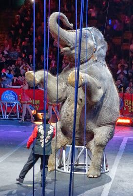 541 Best Images About Ringling Brothers On Pinterest Circus Clown Free Tickets And A Clown