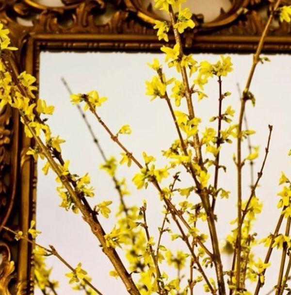 8 ways to spruce up for spring - Forsythia Arrangements