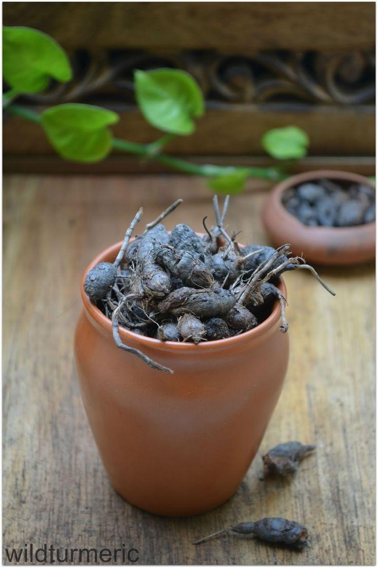 wildturmeric: 5 Top Benefits & Uses Of Nagarmotha | Korai Kizhangu | Cyperus Rotundus | Musta Herb