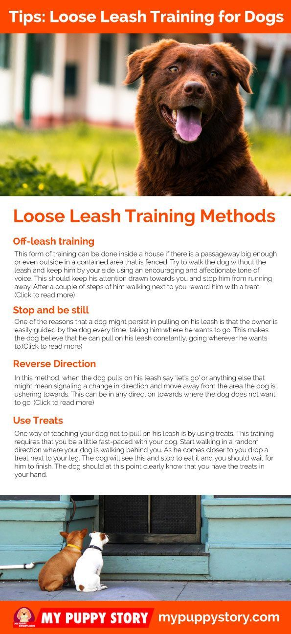 Loose Leash Training For Dogs Loose Leash Training Loose Leash