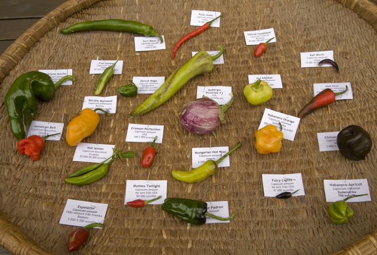 De här chilisorterna odlade vi på gården 2012.