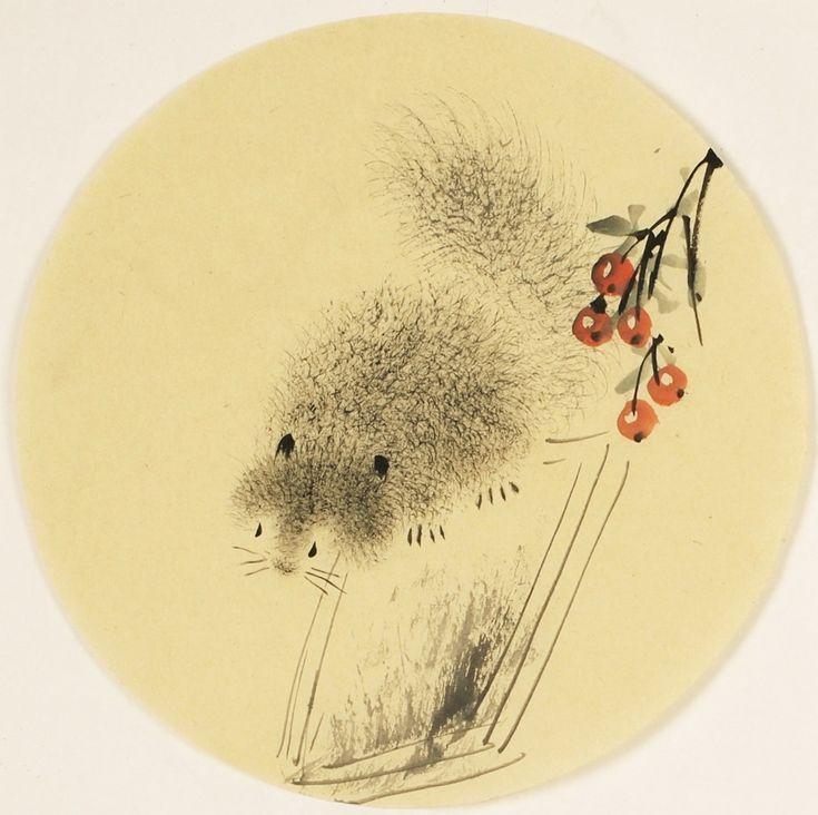 Squirrels - CNAG001575