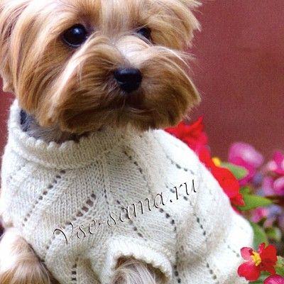 Бежевая туника для собаки - Вязание для собак