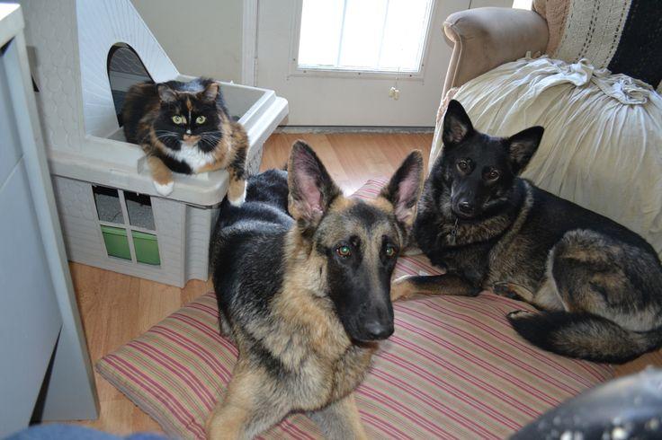 Best Friends Forever, Callie, Ava and Loki -