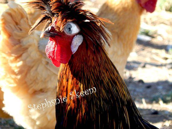 Best 25 Chicken Quotes Ideas On Pinterest: Best 25+ Funny Chicken Pictures Ideas On Pinterest