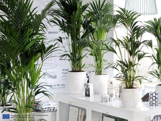 Die besten 25+ Tropical gardening gloves Ideen auf Pinterest - tropische pflanzen im garten