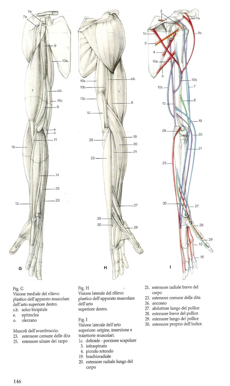 The 607 best Anatomy images on Pinterest | Anatomy reference, Human ...