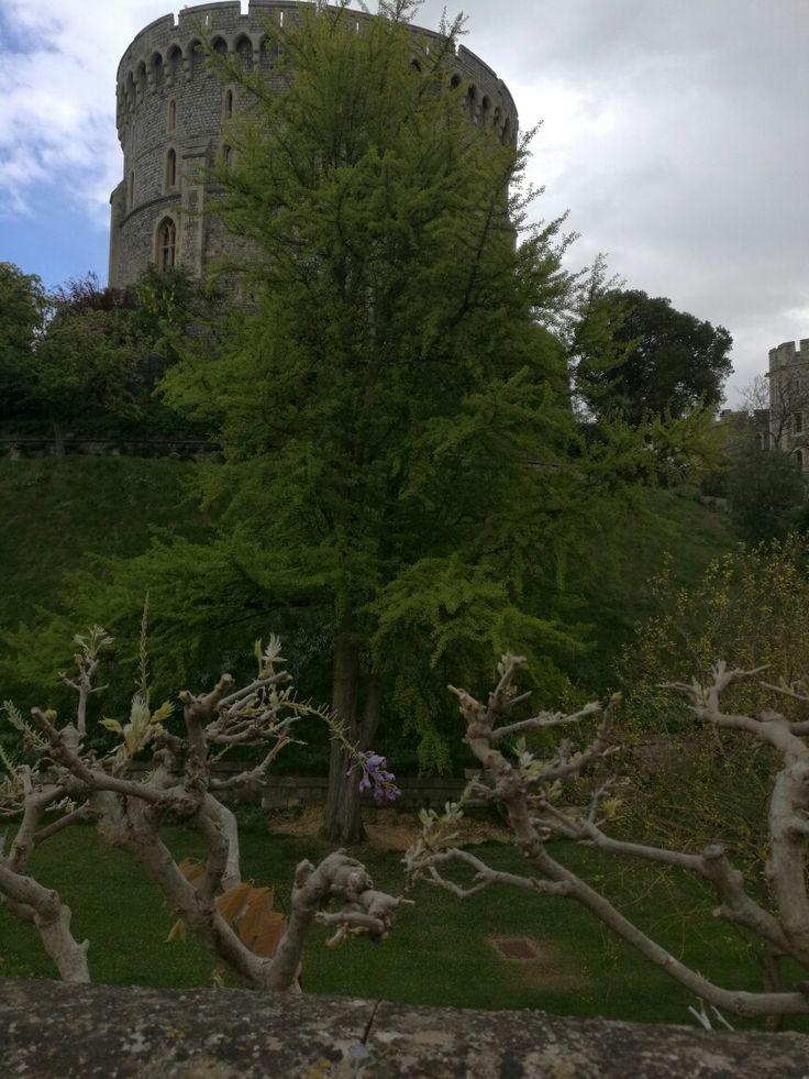 Gardens of Windsor Palace England