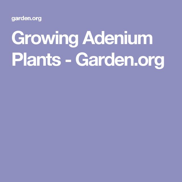 Growing Adenium Plants - Garden.org