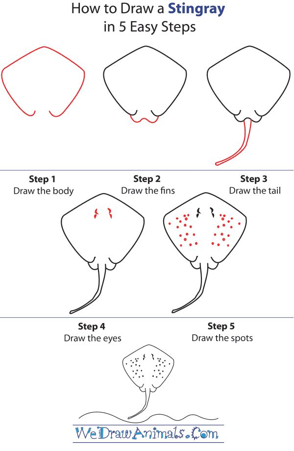 How to Draw a Stingray