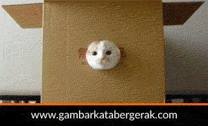 Gambar animasi kucing lucu bergerak, kucingnya nongol-nongol dari dalam kardus :D