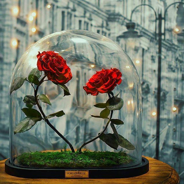 Sebuah luxury rose brand asal British Forever Rose London merilis varian bunga yang diberi nama Forever Rose. Sekilas bunga mawar yang dihadirkan memiliki kesamaan dengan bunga mawar merah yang menjadi ikon dalam film 'Beauty and The Beast' di mana sang mawar tengah merekah dan terbungkus dalam wadah kaca nan luks. Namun yang menarik dari varian Forever Rose ini adalah ia diciptakan mampu bertahan selama tiga tahun tanpa adanya sinar matahari bahkan air. Hal ini dikarenakan Forever Rose…