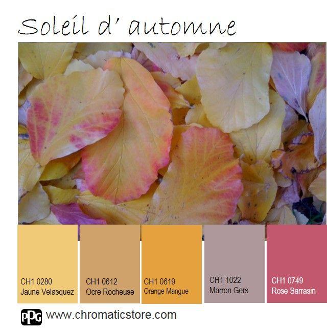 Les 25 meilleures id es de la cat gorie palettes de for Peinture facade couleur ocre