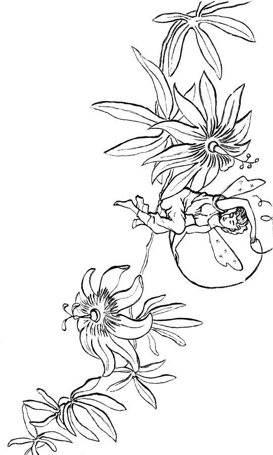 Fairy Coloring Pages - 3
