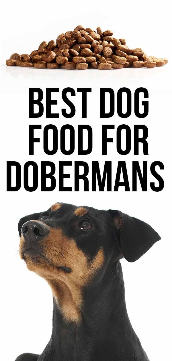 Best Dog Food For Dobermans Great Choices For Active Dogs Best