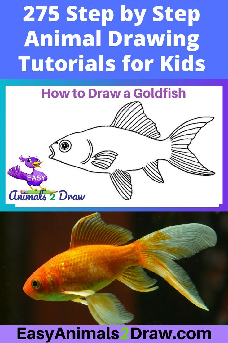 How To Draw A Goldfish Step By Step En 2020