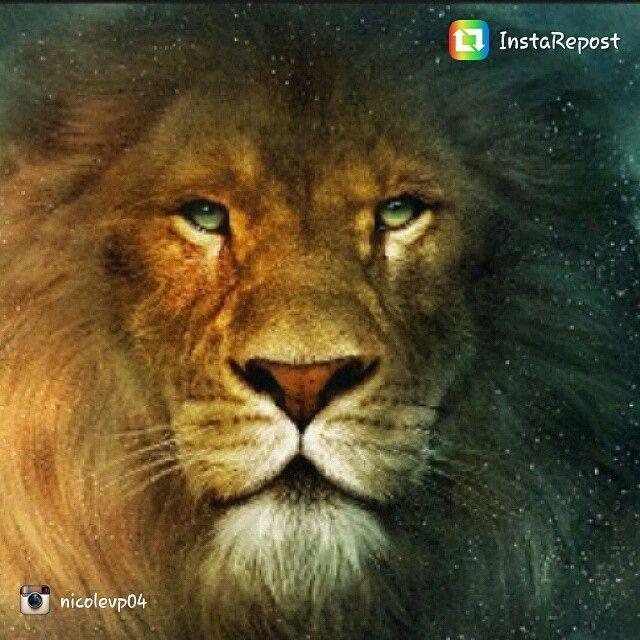 repost via @instarepost20 from @nicolevp04 #Favorite #Animal #Lion #Love #Perfect #Roar #Mane #instarepost20