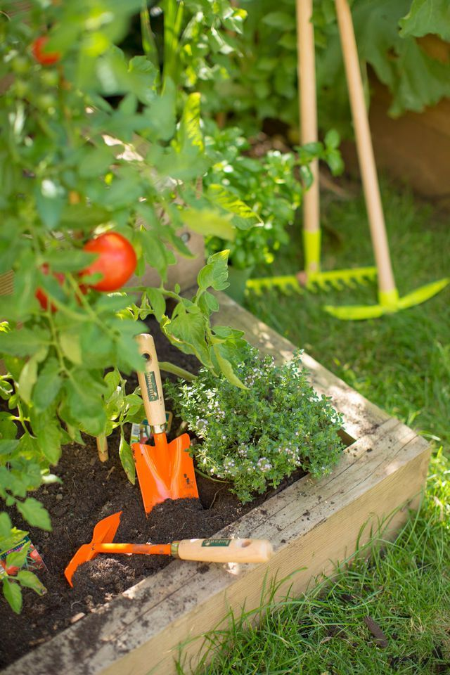 Un potager généreux, des fruits et des légumes de saison, tout au long de l'année... Avec un peu de bonne volonté, le jardin potager est un rêve à portée de main.