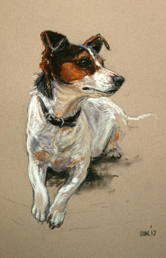 Timmy the Jack Russell