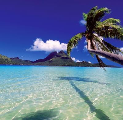 Best Beach + Diving and Snorkeling: French Polynesia