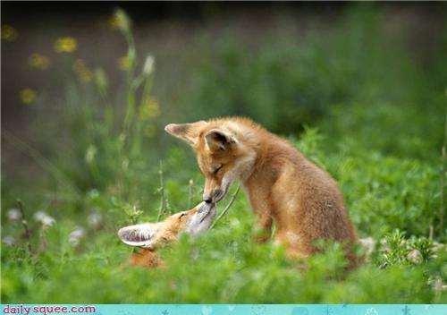 fox kiss
