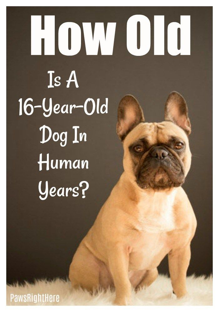 A 16 Year Old Dog Is How Old In Human Years Dog Training