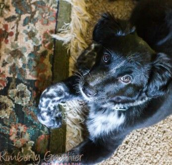 How to potty train a puppy on carpet