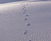 Arenas blancas fotografía impresión 11 x 14 nuevo México huellas rastro sudoeste del desierto paisaje invernal fotografía Print.