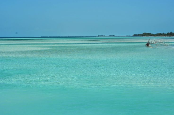 The most beautiful blue waters on Cayo Largo Del Sur, Cuba! #luxlifeincuba #wanderlust #bucketlist #travel