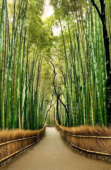 17 best Bamboo images on Pinterest | Bamboo, Connection and Amazing ...