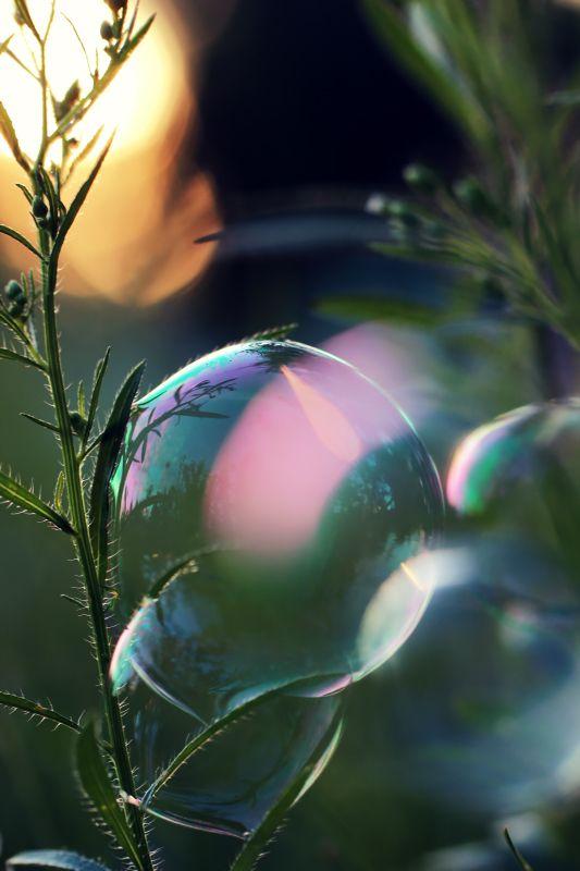 Мыльные пузыри, вечернее солнце, закат и малая зона резкости. Автор Ольга*