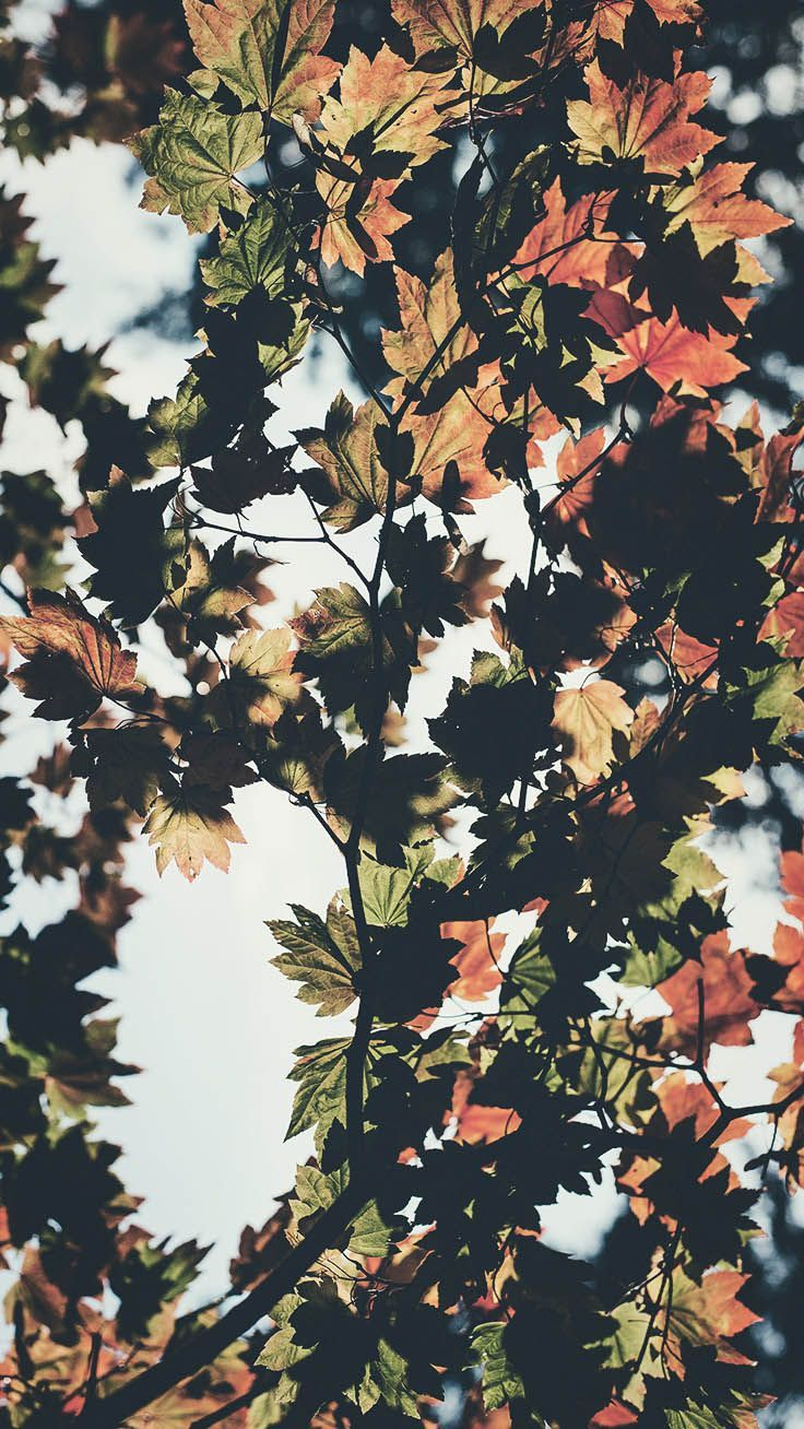 8 Free Autumn Inspired Iphone 7 Plus Wallpapers Preppy Wallpapers Iphone Arkaplanlari Arkaplan Tasarimlari Resim