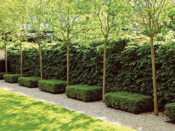 Oltre 25 fantastiche idee su siepi da giardino su for Come costruire un mazzo di portico anteriore