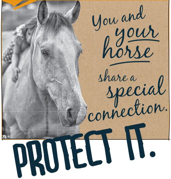36 best Equine Identification \ Ownership images on Pinterest - equine release form